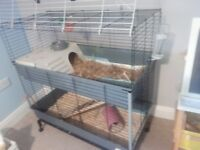 2x guinea pig brothers plus2story 100cm cage ferplast