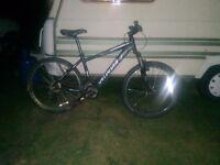 Hard rock Sport Specialised Mountain Bike