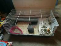 2 BEAUTIFUL FEMALR NETHERLAND DWARF RABBITS + CAGE