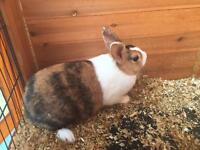2 female rabbits looking for a good home