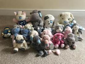 Collection of 23 blue nose teddies