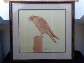 Stunning Framed And Signed Detailed Brown Wash Picture Peregrine Falcon