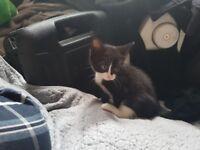 Kittens for £60