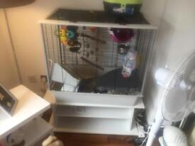 Rat cage need gone ASAP