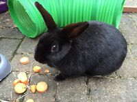 Rabbit needs a loving home