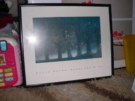 David Noton Woodland Mist Framed Print