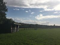Grazing paddocks available to rent in Hampshire