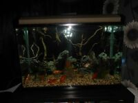 bevelled edge fish tank