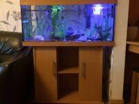 Aquarium 180 liters with fishes !!!