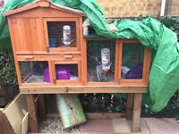 Lion lop and Rex bunny and hutch for sale £100