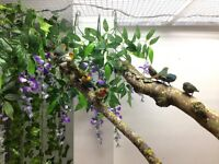 PARROT FINCHES