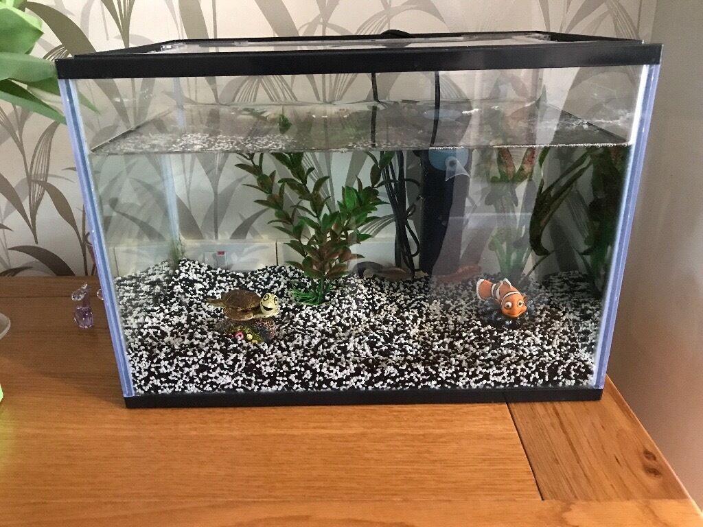 Aquarium fish tank northamptonshire - Fish Tank 2 Fish Included
