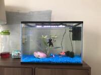 22l fish tank everything included