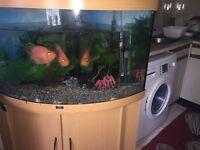 Jewel 190 litre fish tank with fish