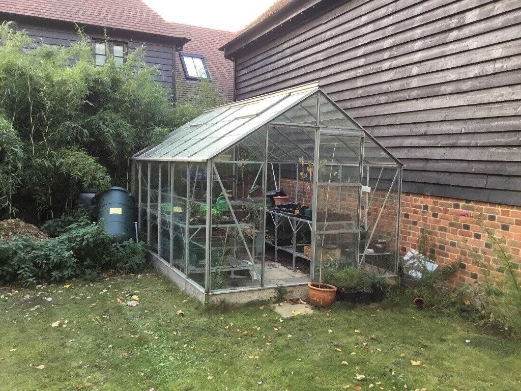 Greenhouse with staging shelving and paving 3.7 x 2.5m