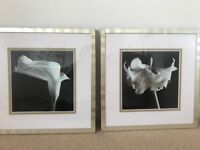 Two glass framed photographic prints in black & white: Lily & Amaryllis