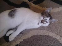 4 month old kitten needs a new home