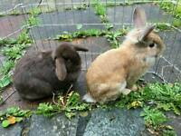Two rabbits to a new home