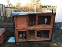 4 guinea pigs and hutch for sale