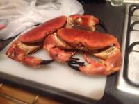 Portland crab on delivery! Freshly caught every weekend. 1kg each.