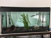 Juwel aquarium with filter. 260L