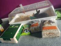 Black lop rabbit, cage and accessories