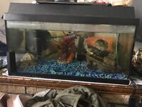 60litre fish tank