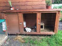 Rabbit Hutch & 2 dwarf rabbits for sale