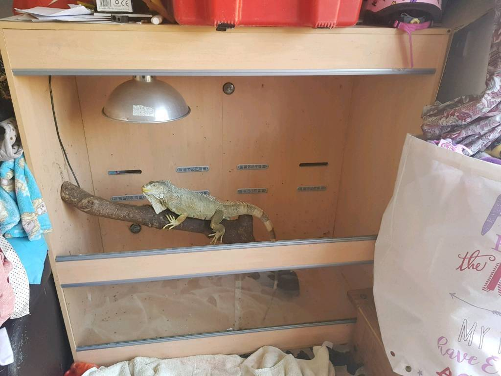 4 x 4 x 2 ft vivarium. Empty and dismantled ready to go. Redruth. Viv iguana lizard snake e.t.c.