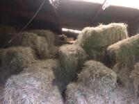Hay Horse, sheep, goats, cows, fodder