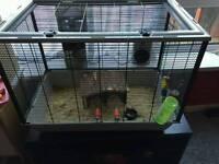 Bargin Robororski hamster & cage