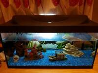 54ltr fish tank
