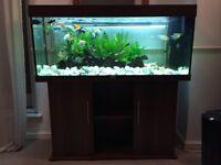 Juwel Rio 240 Aquarium and Cabinet in Dark Wood
