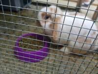 Beautiful bunnies needing forever homes