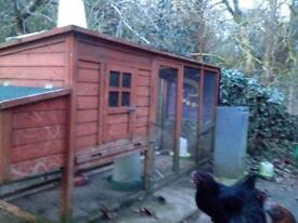 chicken coop with 5 chickens