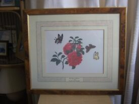 Chinese Watercolour Print No.1424 Camellia with Butterflies