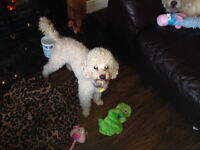 Puppy Power Pet Sitting Service