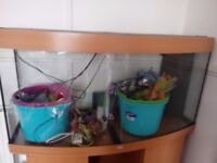 240 litre juwel fishtank and unit