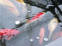 Pond Fish.