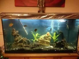 3.5 foot fish tank plus extras
