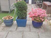 3 plant pots