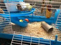 Female hamster and caged