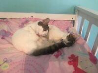 Adorable loving kittens