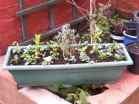 trough planter with plants included