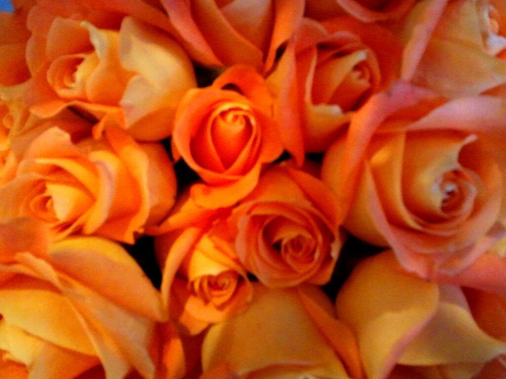 Roses Sunshine