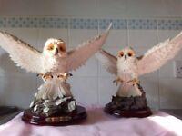 """Academy"" 2 white, flying Owls"
