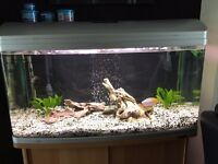 Large Aquarium (Aqua Style 980 by Aqua One) C/W Stand, Fluval 305 Ext filter, Fish and Accessories