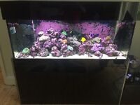 Complete Marine Aquarium Setup inc. Fish and Corals