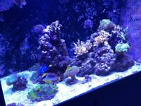 FULLY CURED, REAL REEF ROCK FOR SALE