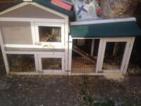 Two 6 month old male guinea pigs, fairly new extra large outdoor hutch and much more